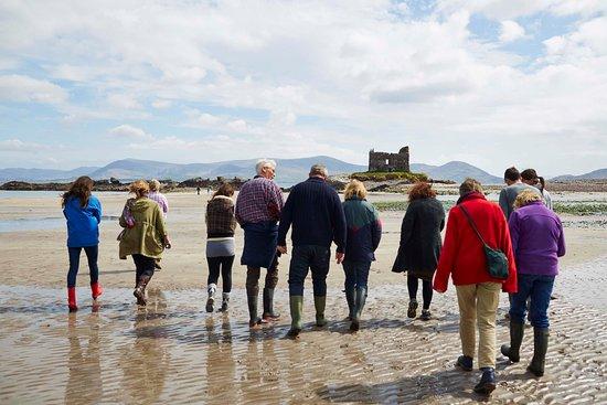 Caherdaniel, Irlanda: Seaweed foraging