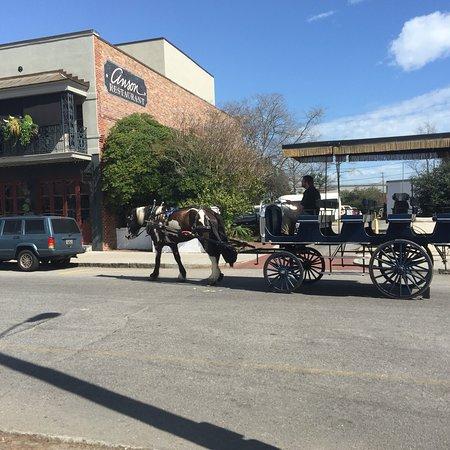 Charleston Sc Carriage Tour Reviews
