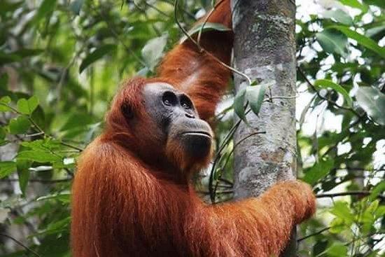 Sumatra Ecotour
