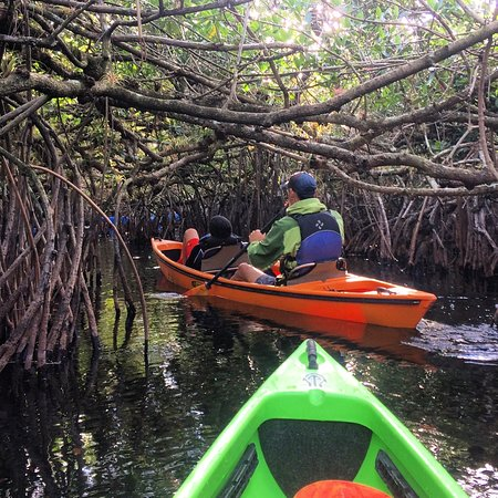 ‪‪Everglades City‬, فلوريدا: 3 hour mangrove tunnel tour‬