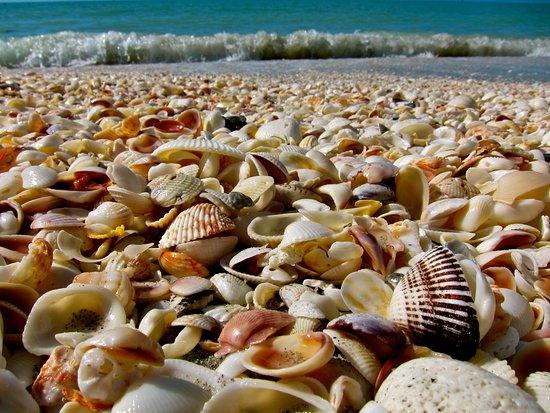 Southwest Florida Dolphin & Eco Tours