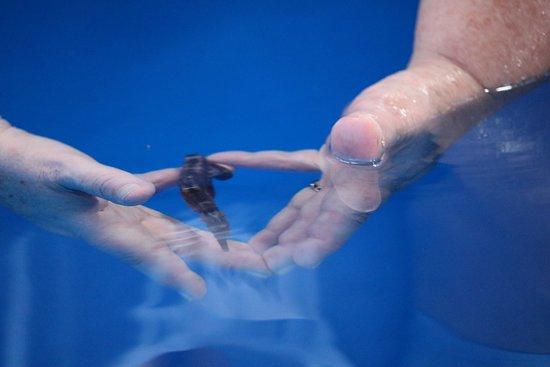 Ocean Rider Seahorse Farm : Holding the Seahorse.
