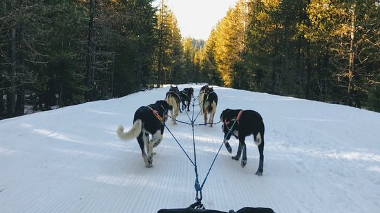 Northwest Dogsled Adventures