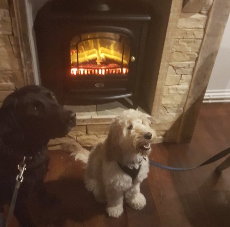 Brandon, UK: dog friendly !Charlie and Reggie at The Brawn's Den