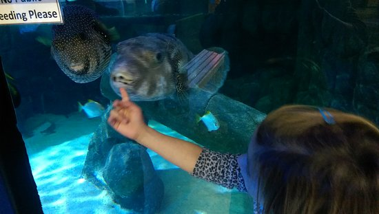 Aquarium of Boise: Playing with the Fishes