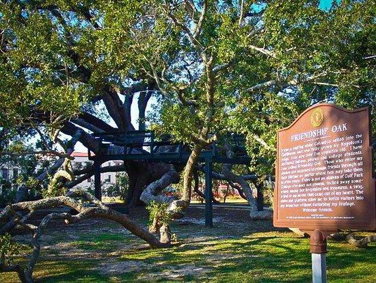 Long Beach Ms The Friendship Oak