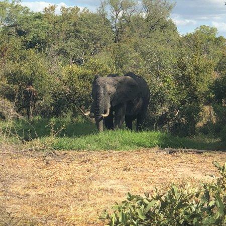 Manyeleti Game Reserve, Afrique du Sud : photo0.jpg