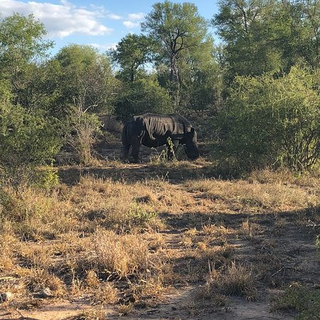 Manyeleti Game Reserve, Afrique du Sud : photo1.jpg