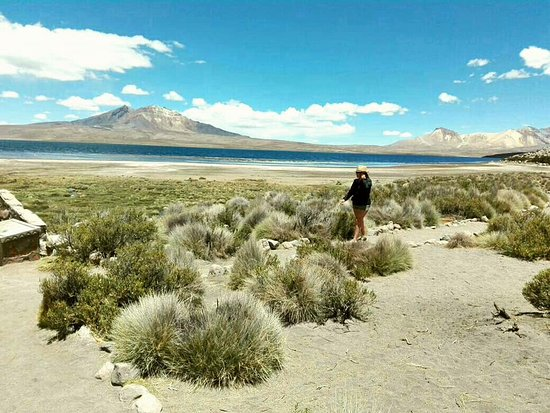 Arica and Parinacota Region, Chile: Lago chungara