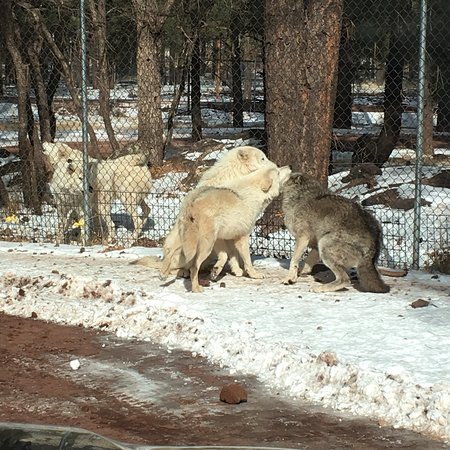 Bearizona Wildlife Park 사진