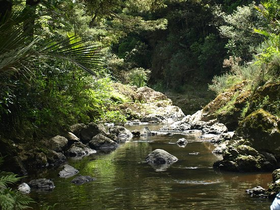 Piroa Falls Track