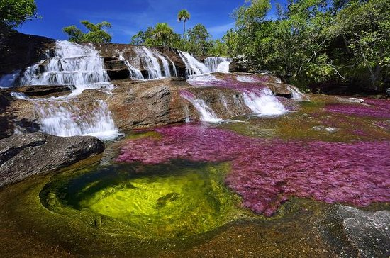 Caño Cristales (Rainbow River) from...
