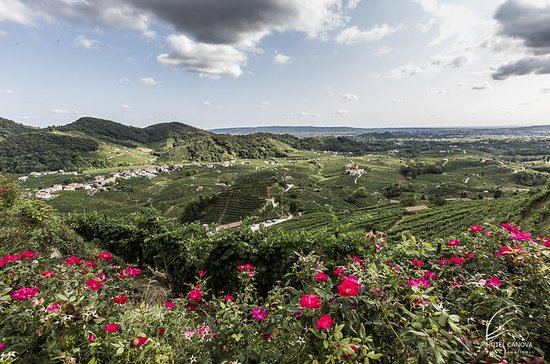 Half Day Tour to the Land of Prosecco with Lunch Included