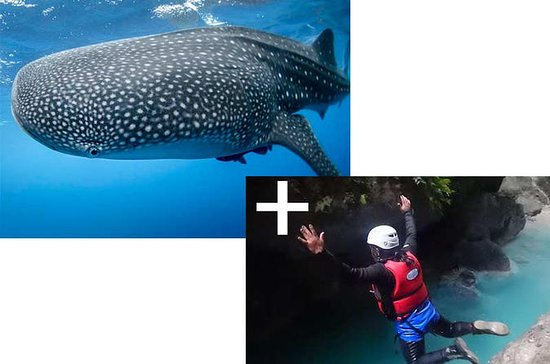 Full day Canyoning and Whaleshark...