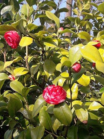 Fleurs - Photo de Jardin des Plantes, Nantes - TripAdvisor