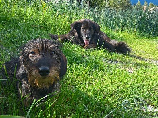 Afritz, Αυστρία: Hunde willkommen