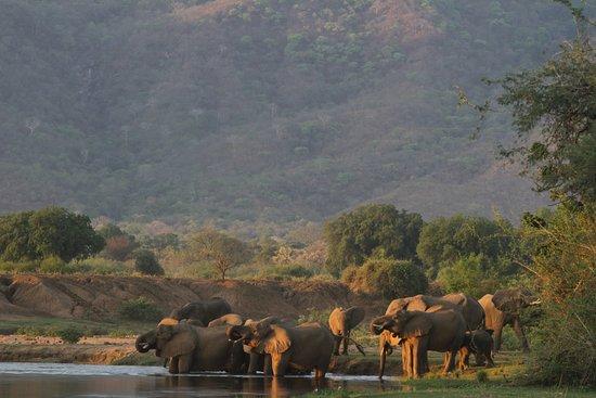 Lower Zambezi National Park, Zambia: Experience - Game Viewing