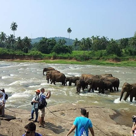 Roo Lanka Tours & Travels