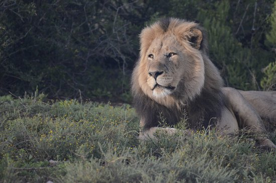 Addo, Sudáfrica: From our sunrise safari