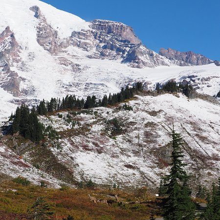 Enumclaw, WA: Seasonal images of the Guest House Inn, Mount Rainier National Park and Tipsoo Lake that one can