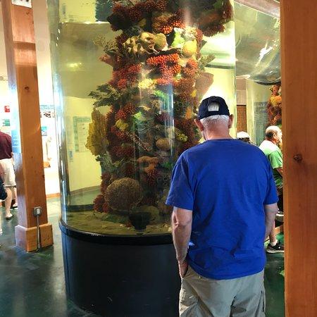 Sea Turtle, Inc.: photo0.jpg