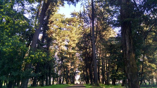 Lautaro, شيلي: one of the path inside the park