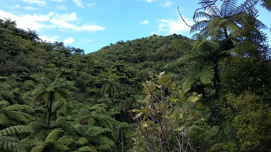 Karaka Waiotahi track