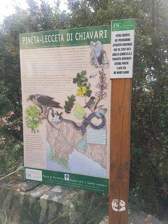 Chiavari, İtalya: 20180221_125535_large.jpg