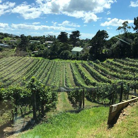 جزيرة واهيكي, نيوزيلندا: photo2.jpg