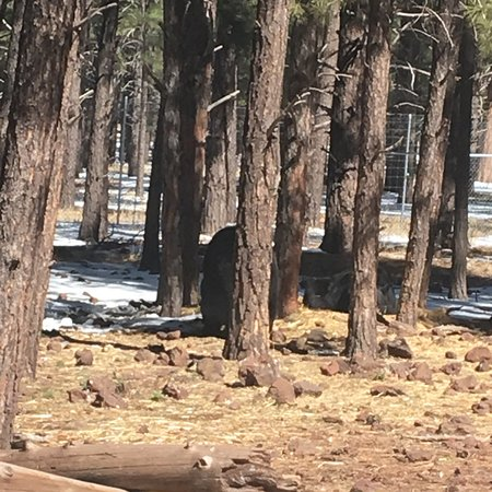 Williams, AZ: photo9.jpg