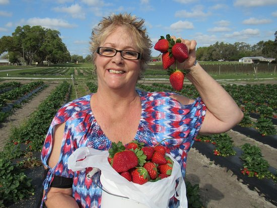 Oxford, FL: Juicy plumb strawberries