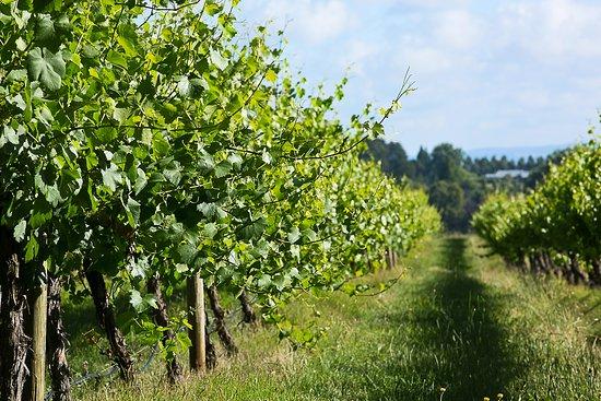 Brangayne Wines Pty Ltd