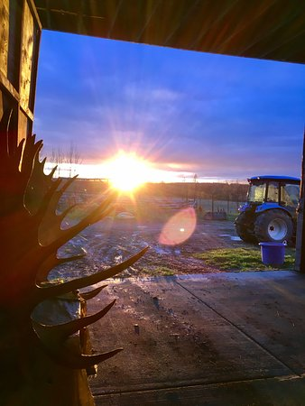 Palmer, AK: Sunset from the barn door