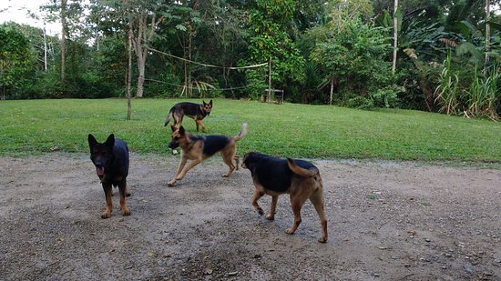 San Antonio, Belize: Always playful and nearby, very quiet and well behaved