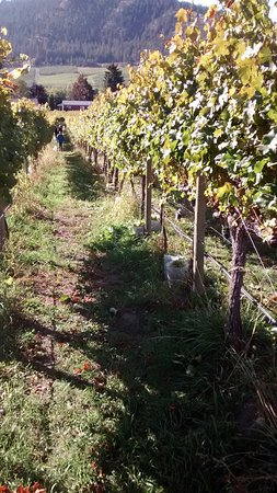 Summerland, Kanada: harvest season