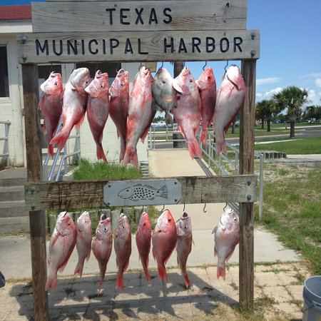 Rockport, TX: State Snapper trips available