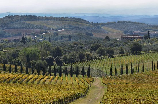 Half-Day Private Chianti Wine Tasting Tour from Siena