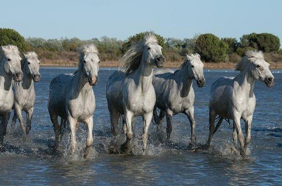 Arles and Camargue Small-Group...