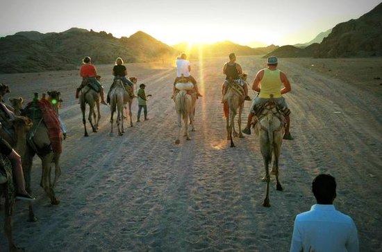 Bedouin Camp Desert Safari Tour from Sharm El-Sheikh