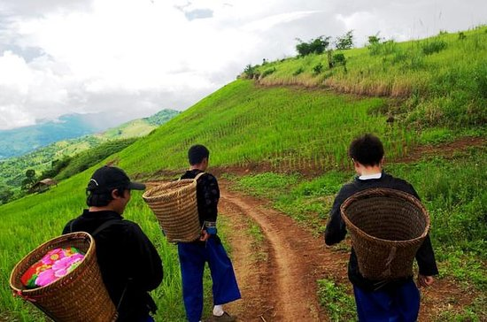 Half Day Doi Tung Royal Projects and Hill Tribes