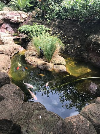 29 on St James Colonial Guest Lodge: The Koi Pond