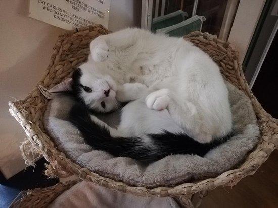 Lady Dinah S Cat Emporium Review