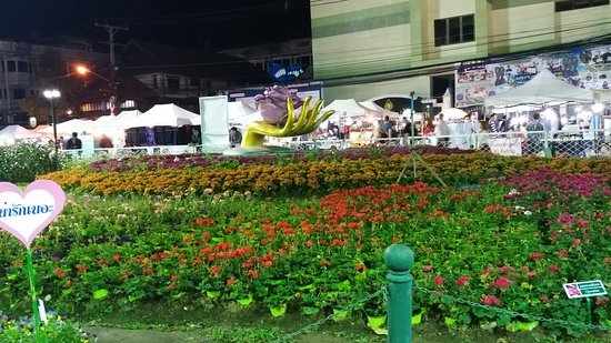 Wiang, Таиланд: flower