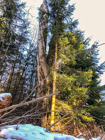 Langweiler, Tyskland: Mein Freund der Baum ist tot!