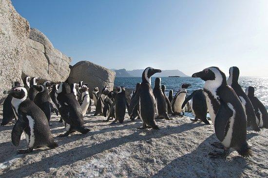 Lakeside, Sudáfrica: Penguins at Boulders Beach