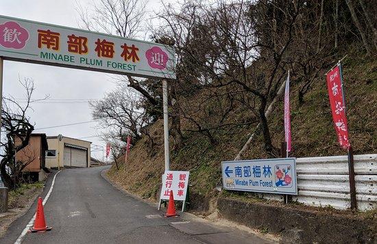 Wakayama Prefecture, Japan: Minabe Plum Forest