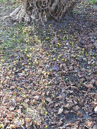 Förster Garten Im Winter Es Wird Durchgeblüht Picture Of