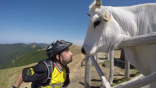 Ареццо, Италия: Here I am, getting up close and personal with some friends on the mountain!