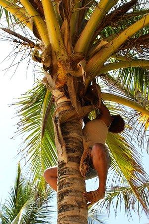 Revolution dating palm beach haver