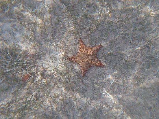 Superbe étoile De Mer Picture Of Blue Lagoon Excursion